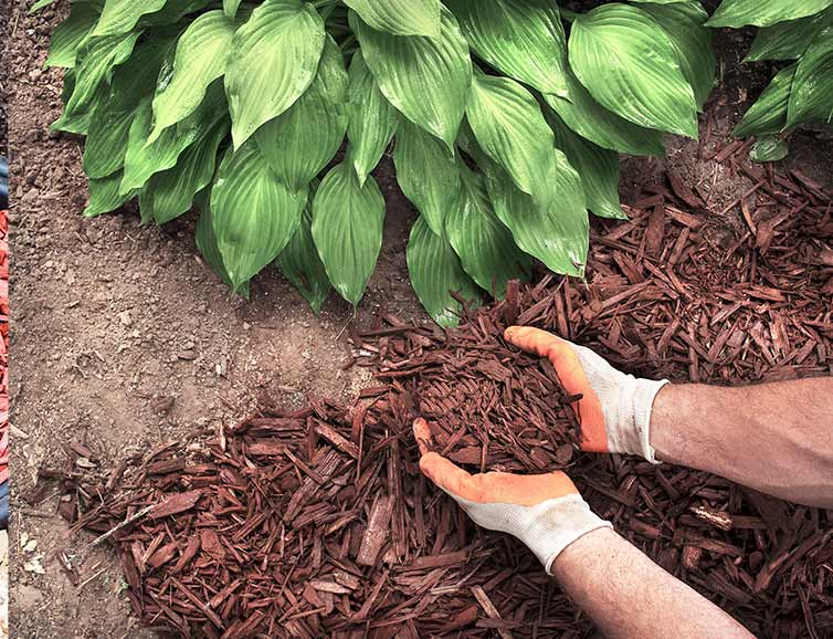 All American Landscaping Spring Professional Mulch Installation Service