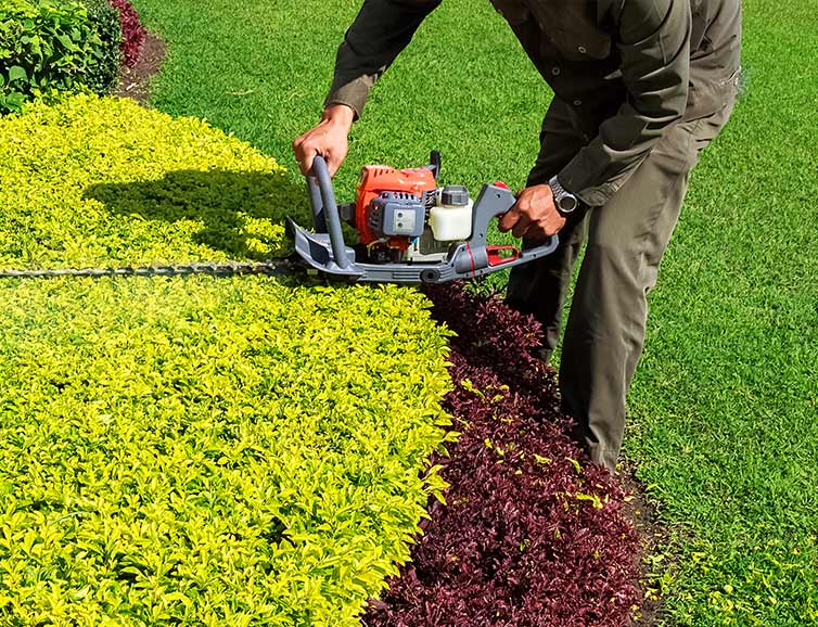 All American Landscaping Professional Trimming Service